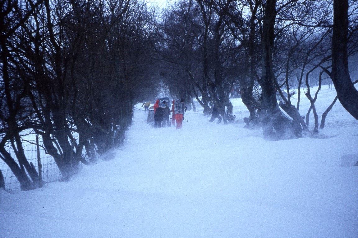 The driveway up from Llwyn Celyn Youth Hostel. A mammoth task ahead of clearing the driveway.